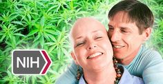 "8/21/15  After Decades of Denial National Cancer Institute Finally Admits that ""Cannabis Kills Cancer"""