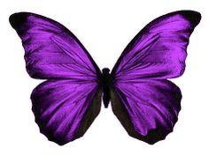 24 x Stunning CADBURY PURPLE Butterflies Edible Decorations Cup Cake Toppers   eBay