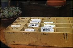 Seed packet organizer with months and weeks you should plant them.