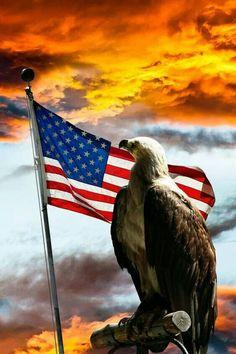Eagle and American Flsg