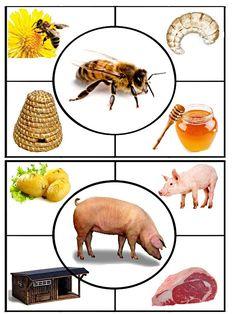 Farm Animals Preschool, Animal Activities For Kids, Preschool Learning Activities, Math For Kids, Preschool Worksheets, Infant Activities, Preschool Activities, Teaching Kids, Preschool Education