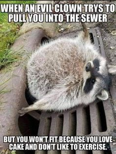 Funny Memes Pics & The post Funny Memes Pics & appeared first on Humor Memes. Funny Animal Memes, Funny Animal Pictures, Cat Memes, Funny Memes, Animal Quotes, Jokes, Animal Funnies, Hilarious Pictures, Funny Koala