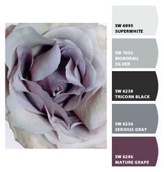 Ideas Bedroom Black And White Ideas Inspiration Color Schemes Apartment Color Schemes, Bedroom Color Schemes, Bedroom Paint Colors, Paint Colors For Living Room, Living Room Grey, Colour Schemes, Living Rooms, Paint Colours, Paint Schemes