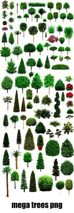 Colassal Mega Trees PNG 25MB by dbszabo1.deviantart.com on @deviantART