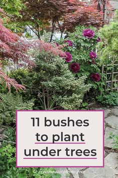 Find out which bushes to plant under trees in the shade garden in your backyard or front yard. These shrubs will help to brighten up your yard. #fromhousetohome #bushes #shade #gardeningtips #gardening #gardenideas Garden Shrubs, Flowering Shrubs, Garden Trees, Shade Garden, Garden Plants, Garden Bed, Garden Benches, Garden Cottage, House Plants