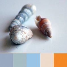 color inspiration from shells