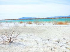 Lonely Bush on White Sand Beach Turquoise Water - Stock Footage | by Iam2012escapee