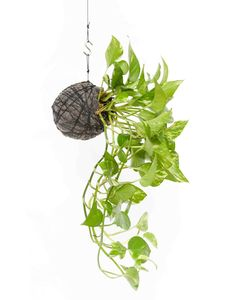 Pop Plant – hanging string garden • Available at thebigdesignmarket.com
