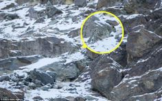 A snow leopard is seen, highlighted and magnified in yellow, camouflaged against a mountain near the Indian Himalayas. - Can You Spot the Snow Leopards in These Photos? Alien Worlds, Rare Images, Animal Habitats, The Weather Channel, Leopards, Endangered Species, Snow Leopard, Amazing Nature, Predator