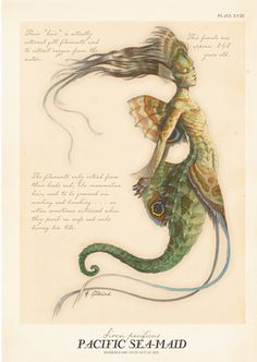 Mermaid as you didn't know they could look. Pacific Sea-Maid from Arthur Spiderwick's Field Guide…