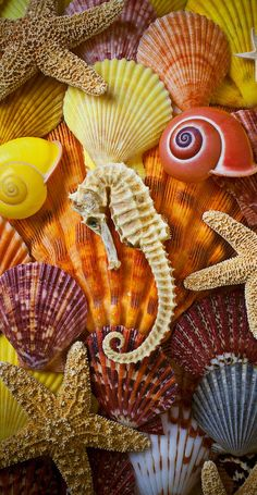 Seahorse And Assorted Sea Shells Photograph by Garry Gay - Seahorse And Assorted Sea Shells Fine Art Prints and Posters for Sale Shell Beach, Ocean Creatures, Shell Art, Sea And Ocean, Belle Photo, Starfish, Krystal, Sea Shells, Coral