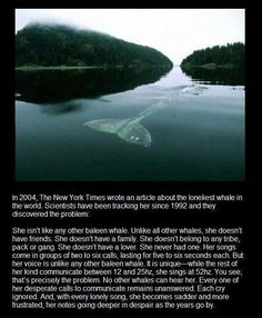 Lie down.. cry, cry a lot! - funny pictures - funny photos - funny images - funny pics - funny quotes - funny animals @ humor