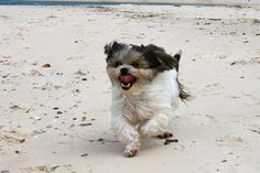 Born Free - Maxi loves playing at the beach