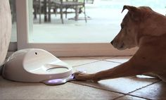 CleverPet is an interactive device that keeps your dog entertained by stimulating its mind and dispensing food as a reward. Fill it up with dry dog food and its software will run your dog through . New Game Consoles, Dog Games, Couch Cushions, Pulsar, Dry Dog Food, Mans Best Friend, Doge, Pet Care, Inventions