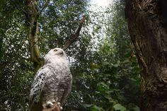 White owl witte uil
