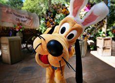 Disneyland // Easter Bunny Pluto // Big Thunder Ranch Springtime Roundup
