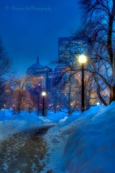 Joann Vitali Photography Boston Public Garden