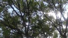 LUSHMONTANAS - YouTube