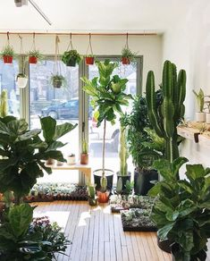 24 Plant Shops that Will Attract Any Plant Lover - Dalla Vita Fake Plants Decor, House Plants Decor, Big Plants, Cool Plants, Plant Decor, Big Indoor Plants, Plant Aesthetic, Zen, Garden Shop