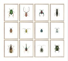 insect Taxidermy Art Print SET of 12. insect prints set, insect wall art, insect illustration, insect drawing, insect poster, insect chart by curiousgallery on Etsy https://www.etsy.com/listing/235531009/insect-taxidermy-art-print-set-of-12