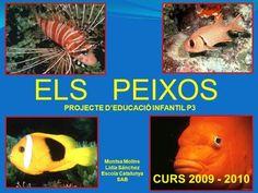 ELS PEIXOS PROJECTE Ed. Infantil P3 - YouTube