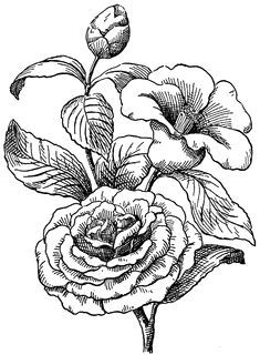 camelia tattoo - Pesquisa Google