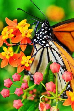 GIve it up for pollinators!