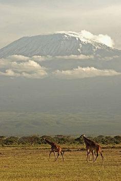 Kilimanjaro,Tanzania ( the caption said 'Kenya' ???)