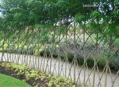 Living Willow Fence | живая изгородь из ивы своими рукамина
