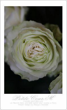 2014・01・30 薔薇 オートクチュール