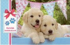 Hartelijk gefeliciteerd!      Wenskaart met schattige puppies Labrador Retriever, Animals, Labrador Retrievers, Animaux, Animales, Animal, Dieren, Labrador Retriever Dog