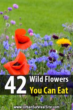 Even if you don't have to eat wild flowers for survival, you can still eat them for their nutritional value. Some flowers make a great addition to meals.