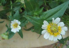Algún enamorado arrancó un pétalo y encontró pronto el sí ...¡me quiere!, uff se salvó la flor