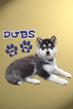 Dubs cute UW mass cot