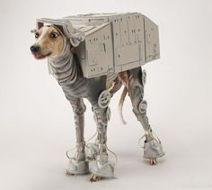 Unique costume was made by Katie Mello for her Italian greyhound dog.