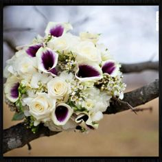 White Hydrangea and Picasso calla Lilly bridal bouquet   www.myfloralimpressions.com Maria Linz Photography