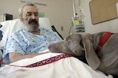 animal therapy. #hawaiirehab www.hawaiiislandrecovery.com