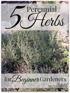 5 Perennial Herbs for the Beginner Gardener - PIN now to have when you plan your spring garden!