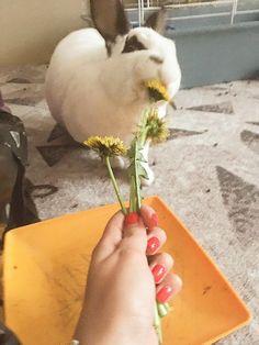 Pets) Зверьки)