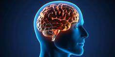 #Día mundial del cerebro: qué es y cómo detectar un ACV - Diario Veloz: Diario Veloz Día mundial del cerebro: qué es y cómo detectar un ACV…