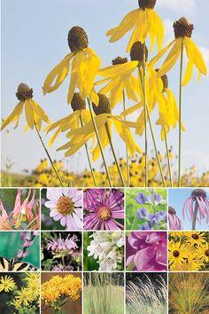 96 Plant Songbird Garden (Medium Loam or Clay Soil in Full Sun)