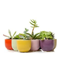 Houseplants look twice as nice when they're packed in a sweet ceramic pot. A set of nine means there's one for every succulent and flower.