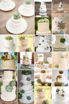 Succulent Wedding Cakes @Carl House Wedding Venue #wedding #cakes www.carlhouse.com