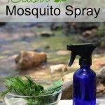How to Make Homemade Basil Mosquito Repellent Spray