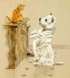 west highland white terrier #westie #westhighlandwhiteterrier