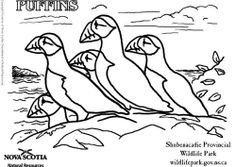 Coloring page puffins Free Coloring Sheets, Coloring Pages, Newfoundland, Quilts, Compassion, Project Ideas, Stained Glass, Journaling, Bible