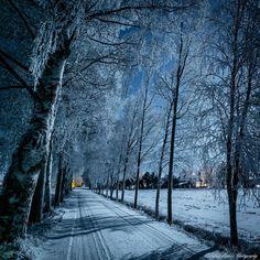 Koivukujan tunnelmaa / On the road through frosty birch trees Lapua, Finland)