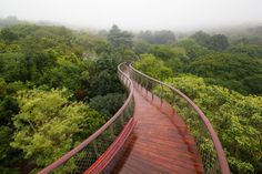 This Canopy Walkway Lets You Walk Above The Trees In Cape Town, South Africa. The Kirstenbosch Centenary Tree Canopy Walkway in Cape Town allows you to walk above the trees. Posed high above the trees, a walk across this beautiful platform offers a unique vantage point over the forest trees below. You can pretend you are a bird or a monkey, taking in the lush forest from such great heights. #visitsouthafrica #amitrips #placetovisit #travelafrica #visitcapetown