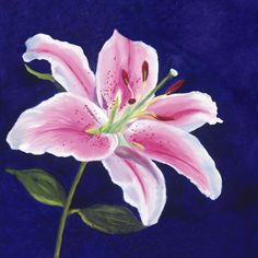 images stargazer lily | Portrait of a Stargazer Lily | Art of Giving