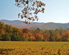 A colorful display of autumn foliage against a blue sky. Cades Cove in the Smoky Mountains is abundant with fall color.